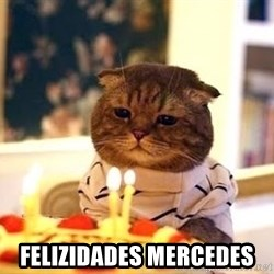 Birthday Cat - Felizidades Mercedes