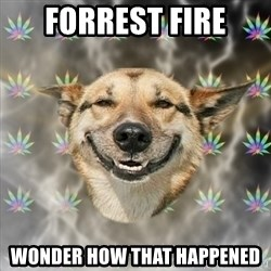 Stoner Dog - forrest fire wonder how that happened