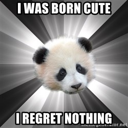 Regretting panda - i was born cute i regret nothing