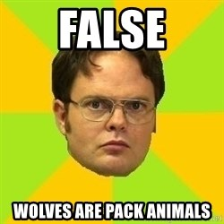 Courage Dwight - False Wolves are Pack Animals