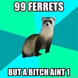 Obvious Question Ferret - 99 ferrets  but a bitch aint 1