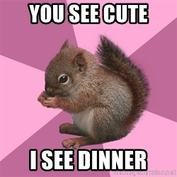 Shipper Squirrel - you see cute i see dinner