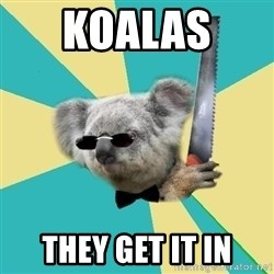 BOI_Koala - koalas  they get it in