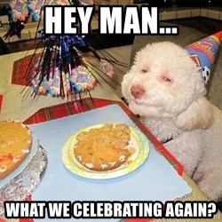 Stoned Birthday Dog - Hey man... what we celebrating again?