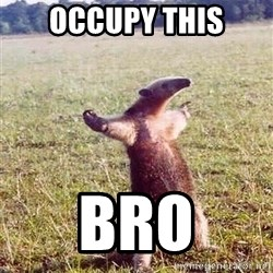 Anteater - occupy THIS BRO