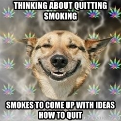 Stoner Dog - thinking about quitting smoking smokes to come up with ideas how to quit