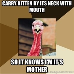 Quirky Turkey - Carry kitten by its neck with mouth So It knows I'm it's mother