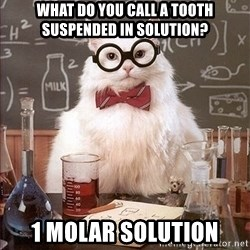 Science Cat - What do you call a tooth suspended in solution? 1 molar solution
