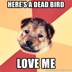 Typical Puppy - HERE'S A DEAD BIRD LOVE ME