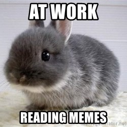 ADHD Bunny - at work reading memes
