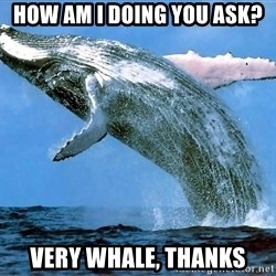 whaleeee - how am i doing you ask? very whale, thanks