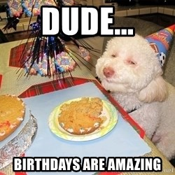 Stoned Birthday Dog - Dude... birthdays are amazing