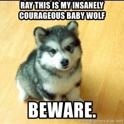 Baby Courage Wolf - Ray THIS IS MY INSANELY COURAGEOUS BABY WOLF bEWARE.
