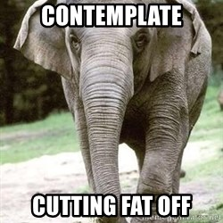 Eating Disordered Elephant  - contemplate cutting fat off
