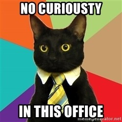 Business Cat - no curiousty in this office
