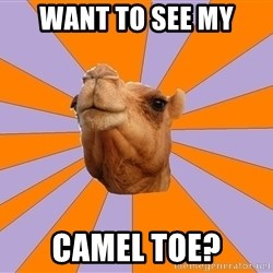 Foul Bachelor Camel - WANT TO SEE MY CAMEL TOE?