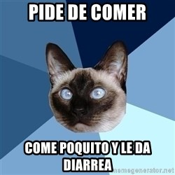 Chronic Illness Cat - Pide de comer Come poquito y le da diarrea