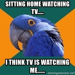 Paranoid Parrot - sitting home watching tv..... i think tv is watching me......