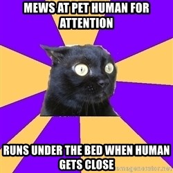 Anxiety Cat - mews at pet human for attention runs under the bed when human gets close