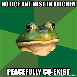 Foul Bachelor Frog - notice ant nest in kitchen peacefully co-exist
