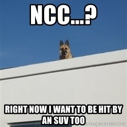 Roof Dog - NCC...? right now i want to be hit by an suv too