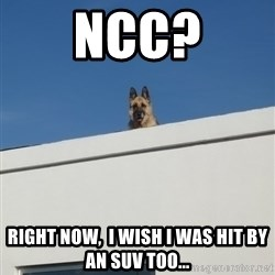 Roof Dog - NCC? RIght now,  i wish i was hit by an suv too...