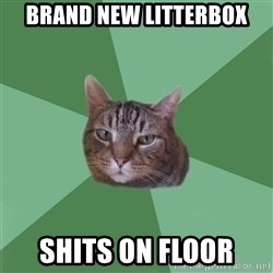 fyeahassholecat - Brand new litterbox Shits on floor