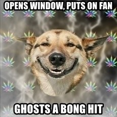 Original Stoner Dog - Opens window, puts on fan ghosts a bong hit