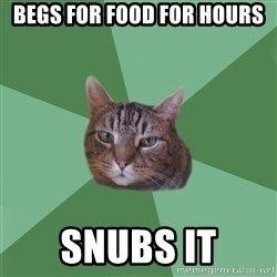 fyeahassholecat - begs for food for hours snubs it
