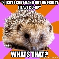 "Homeschooled Hedgehog - ""sorry I CANT hang out on friday i have co-op"" whats that?"