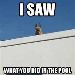 Roof Dog - i saw what you did in the pool
