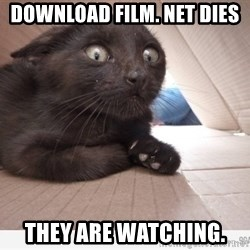Paranoid cat - DOWNLOAD FILM. NET DIES THEY ARE WATCHING.
