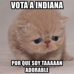Super Sad Cat - Vota a Indiana por que soy taaaaan adorable