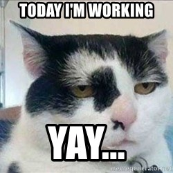 Serious Cat - today i'm working yay...