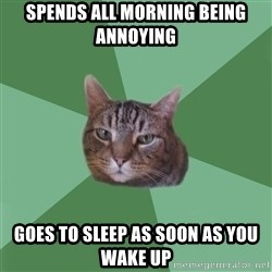 fyeahassholecat - spends all morning being annoying goes to sleep as soon as you wake up