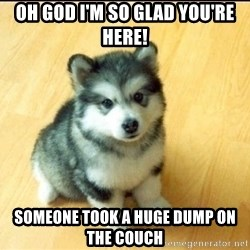 Baby Courage Wolf - OH GOD I'M SO GLAD YOU're HERe! SOMEONE TOOK A HUGE DUMP ON THE COUCH