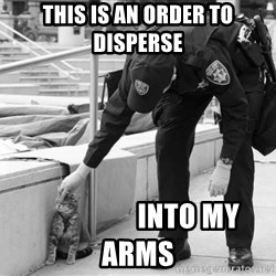 Oakland Riot Cat - THIS IS AN ORDER TO DISPERSE                   INTO MY ARMS