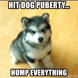 Baby Courage Wolf - hit dog puberty... hump everything