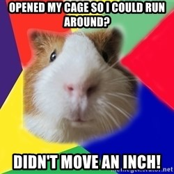 Typical guinea pig - opened my cage so i could run around? didn't move an inch!