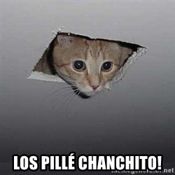Ceiling cat - LOS PILLÉ CHANCHITO!