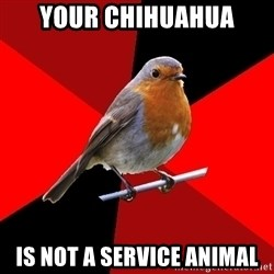 Retail Robin - Your chiHuaHua is not a service animal