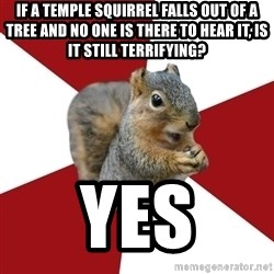 Temple Squirrel - IF A TEMPLE SQUIRREL FALLS OUT OF A TREE AND NO ONE IS THERE TO HEAR IT, IS IT STILL TERRIFYING? YES