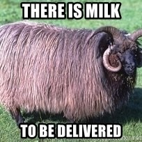 Churro Sheep Wouldn't - There is milk to be delivered