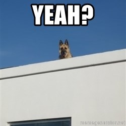 Roof Dog - yeah?
