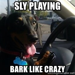 puppycop - Sly playing Bark like crazy