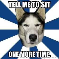 Skeptical Husky - Tell me to sit One more time.