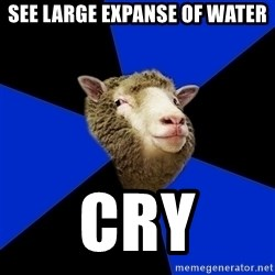 Supernatural Fandom Sheep - See large expanse of water cry