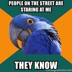 Paranoid Parrot - People on the street are staring at me  they know