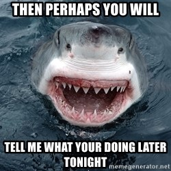 Insanity Shark - Then Perhaps You will Tell me what your doing later tonight