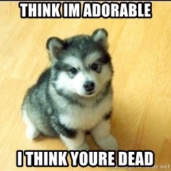 Baby Courage Wolf - think im adorable i think youre dead